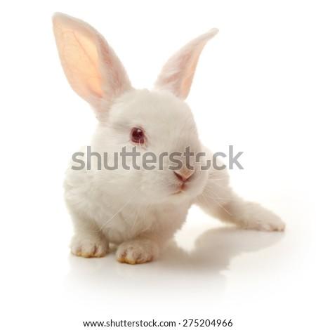 Little white rabbit. Isolated on white background - stock photo