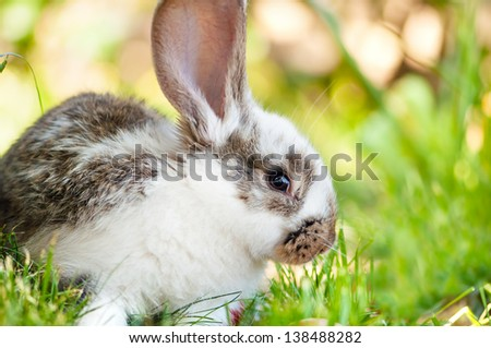 Little white rabbit or bunny sitting in grass with green background - stock photo