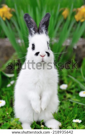 Little white rabbit standing on hind legs in the grass