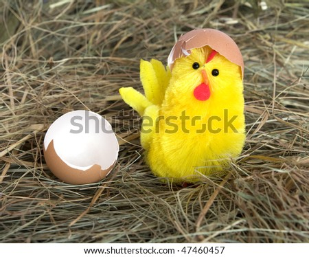 little yellow chicken on hay