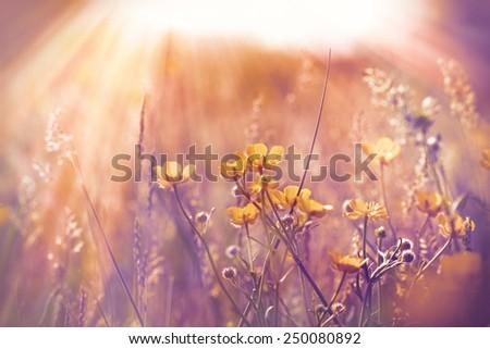 Little yellow flowers in meadow - stock photo