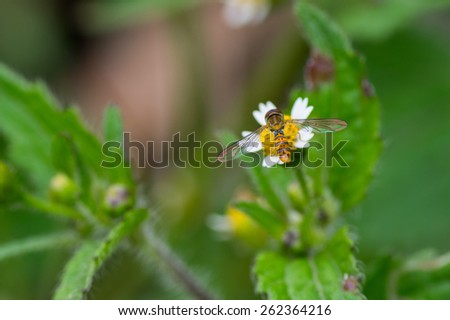 Little yellow fly over a flower  - stock photo
