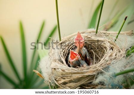 Little young birds in a bird nest - stock photo