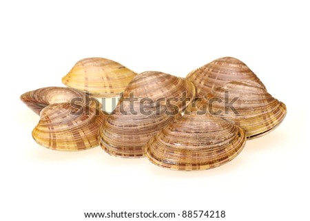 Live clams  on white background - stock photo