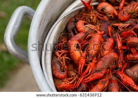 how to purge live crawfish
