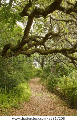 Live Oak Shading Garden Path - stock photo
