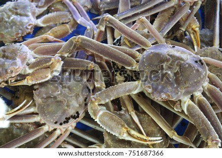 Live snow crabs, a common seafood available at fish markets in Korea.