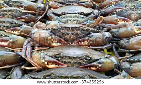 Live soft-shell crab in the basket (selective focus).  Soft-shell crab is a culinary term for crabs which have recently molted their old exoskeleton and are still soft.  - stock photo