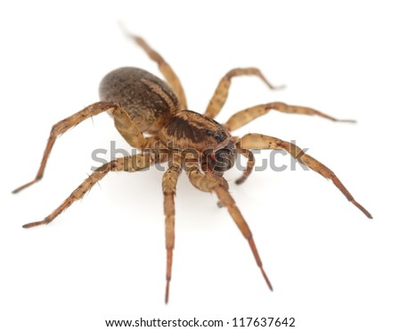Live spider isolated on white background with shadow, macro