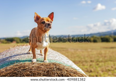 lively beige Puppy on big hay bale - stock photo