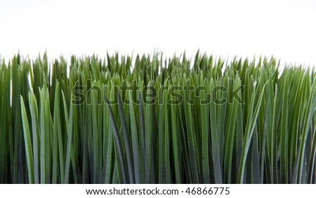 Lively green grass isolated on a white background.