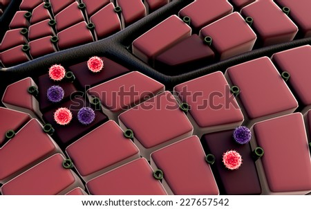 liver surface, liver cells, liver disease, liver structure, structure of the liver, virus attack the liver, Human Immune System - stock photo