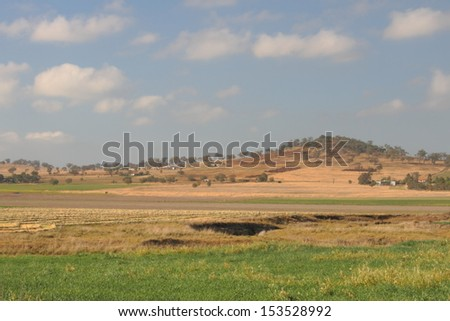 livestock feed crops on the darling downs region toowoomba queensland australia - stock photo