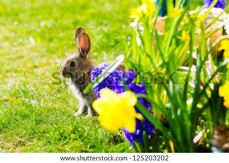 Living Easter Bunny behind flowers on a meadow in spring - stock photo