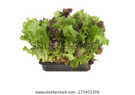 Living salad leaves growing in a plastic tray isolated against white - stock photo