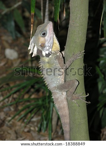 Lizard climbing tree - stock photo