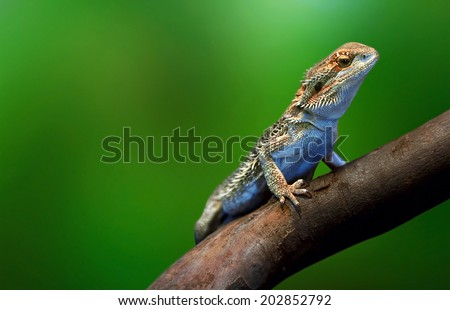 Lizard in wildlife on tree branch on tropical island - stock photo