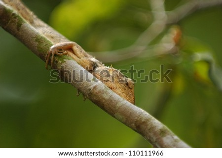 Lizard on a wood
