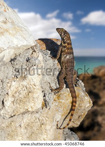 lizard on the rock - stock photo