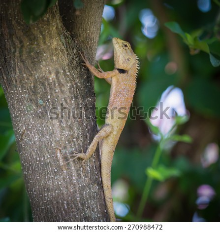 Lizard on the tree,Thailand
