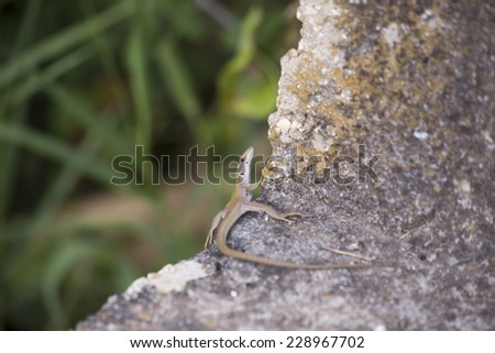 lizard on the wall - stock photo