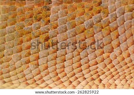 Lizard skin texture background - stock photo