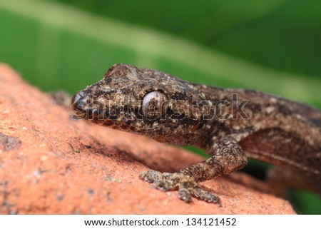 lizzard - stock photo