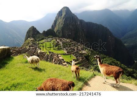 Llama at Machu Picchu in Peru - stock photo