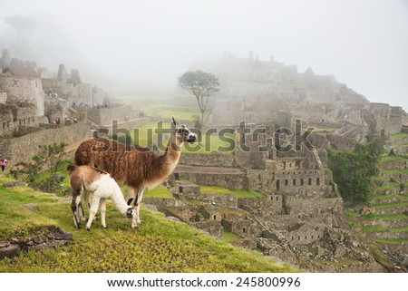 Llama at Machu Picchu, Peru - stock photo