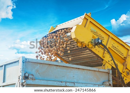 loadding potato into tipper at harvest on background of sky very close up - stock photo