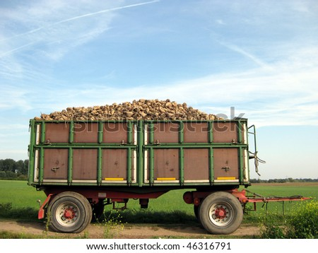 loaded truck trailer with suger-beets