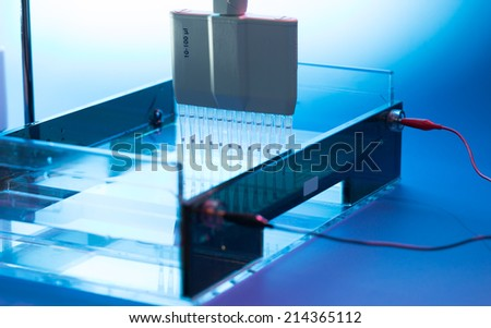 Loading DNA Samples onto an Agarose Gel for Electrophoresis - stock photo