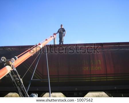loading wheat into railcar in Saskatchewan - stock photo