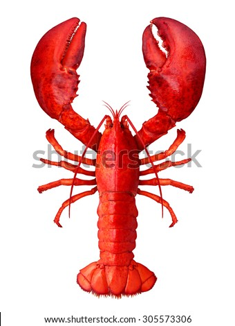 Lobster isolated on a white background as fresh seafood or shellfish food concept as a complete red shell crustacean in an overhead view isolated on a white background. - stock photo