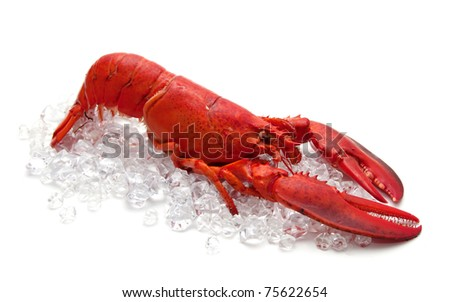 lobster on Ice isolated on a white background - stock photo