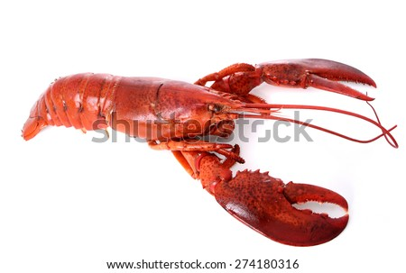 Lobster over white background - stock photo