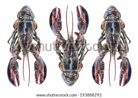 Lobsters on white background - stock photo