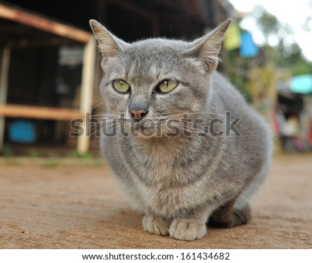 Local gray cat looking and sitting on ground. - stock photo