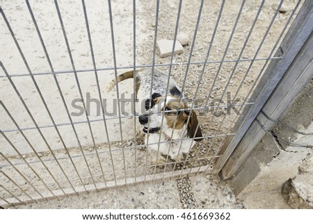 Locked kennel dogs abandoned, sadness