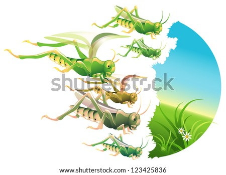 Locust swarm eating everything in their path - stock photo