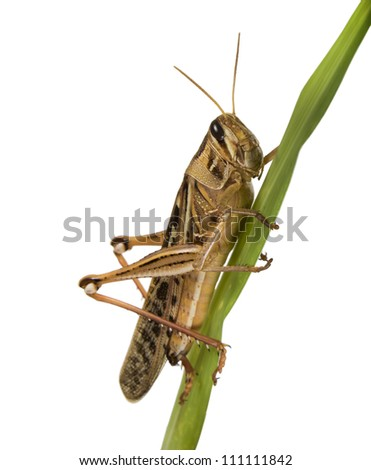 Locusts on a green plant