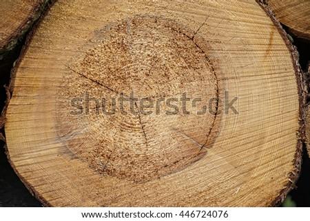 Log lumber timber tree round ring pine spruce tree-ring detail close-up - stock photo