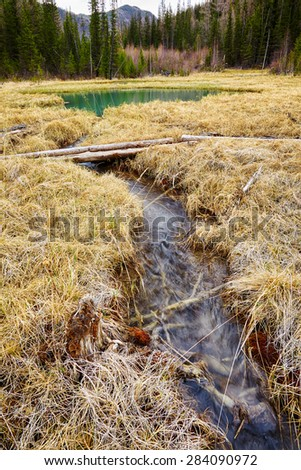 Log-path ower swamp in Altay tajga near Blue Lake at early Spring time - stock photo