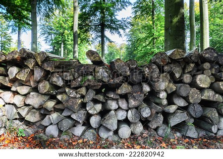 Log pile in the forest  - stock photo