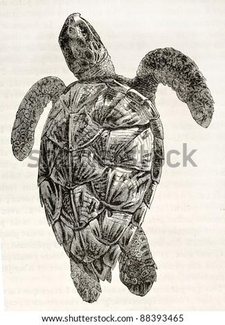 Loggerhead sea turtle old illustration (Caretta caretta). By unidentified author, published on Magasin Pittoresque, Paris, 1844 - stock photo