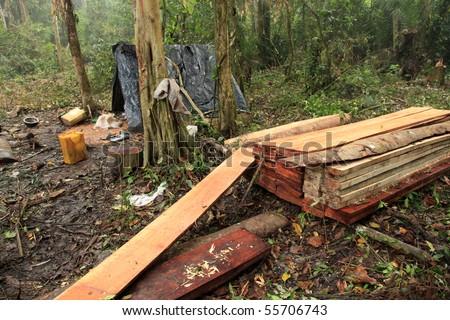 Logging - Deforestation - Remote Untouched Area of Western Uganda, Africa - stock photo