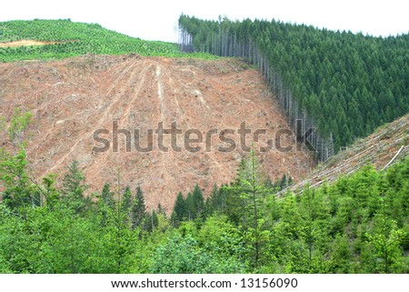 Logging practice known as clearcutting. - stock photo