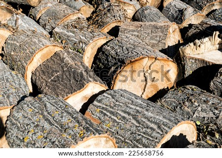 Logging. Tree trunks ready for transport. Andalusia, Spain - stock photo