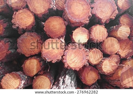 logging truck transportation - stock photo