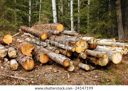 Logs freshly cut